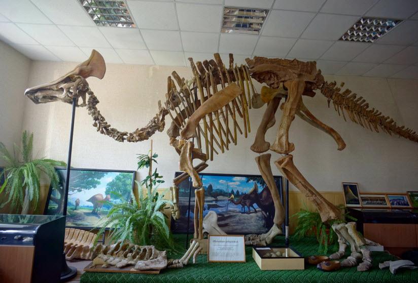 Музей палеонтологии