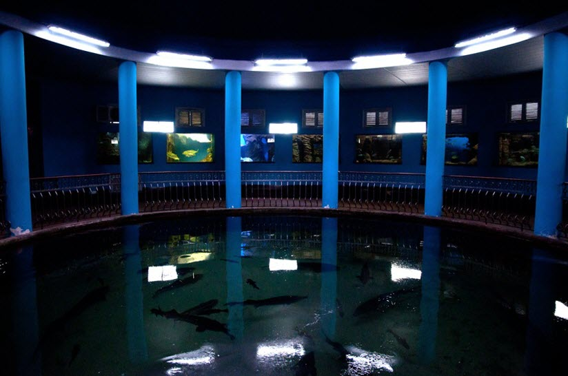 Музей-Аквариум