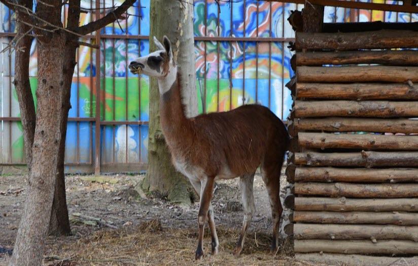 Симферопольский зоопарк