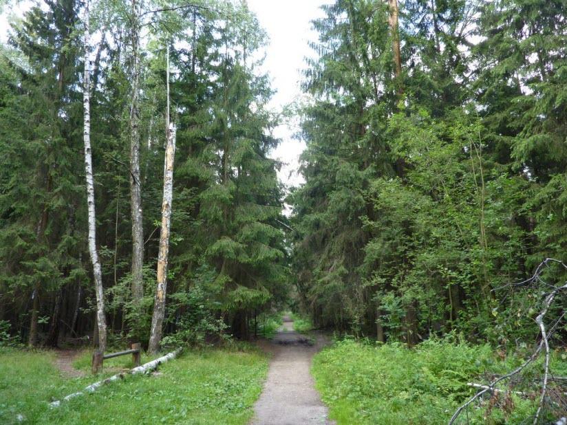 Кучинская лесопарковая зона