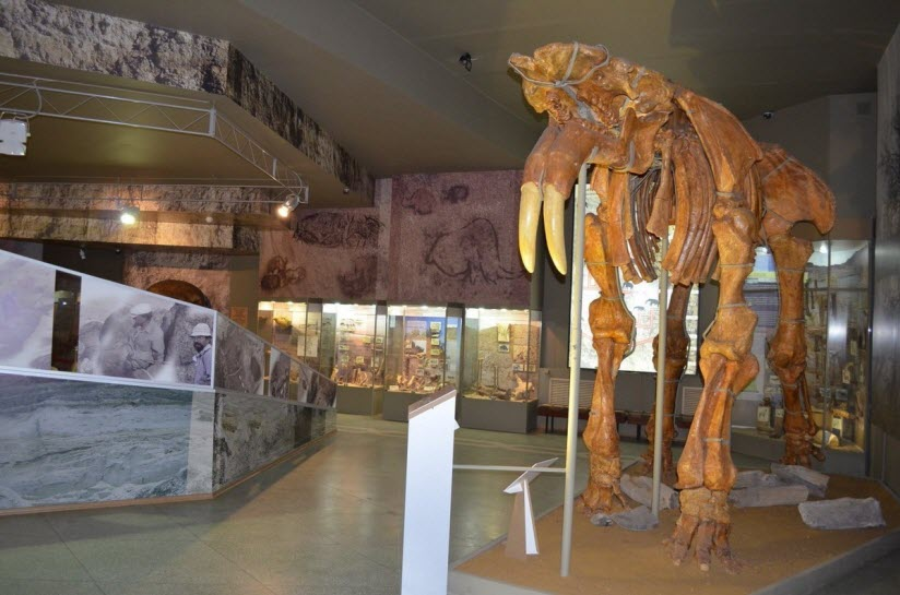 Палеонтологический и историко-археологический музей