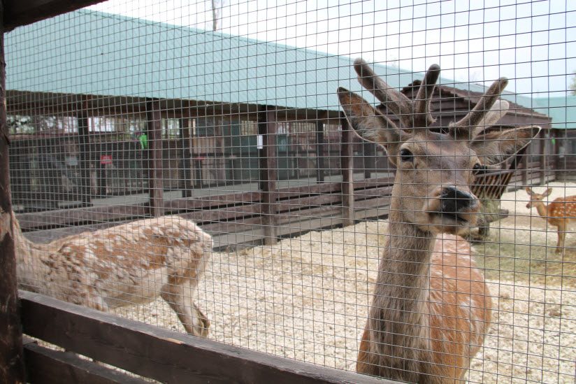 Зоопарк «Лукоморье»