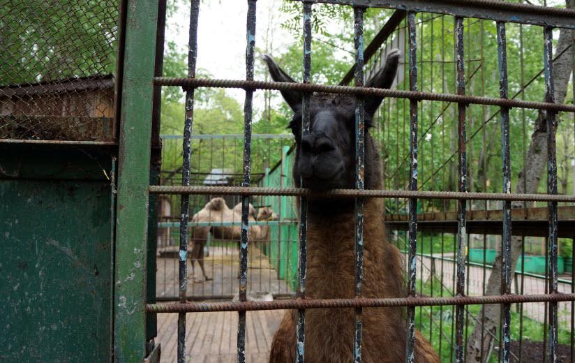 Зооцентр «Питон»