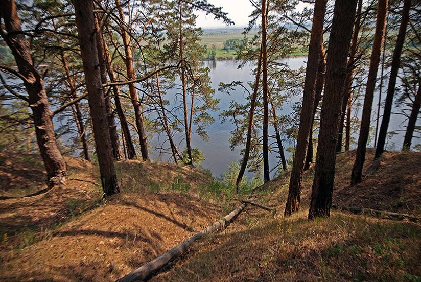 Танаевский лес