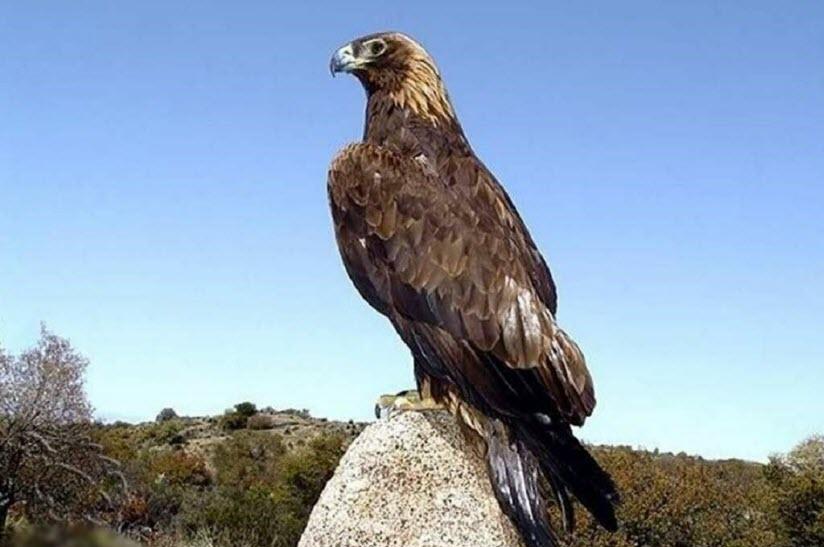 Зоологический памятник «Гнездо Беркута»