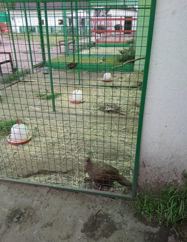 Птичья дача