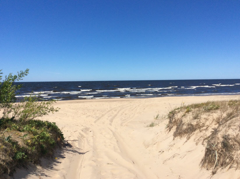 Дюны на южном берегу Финского залива