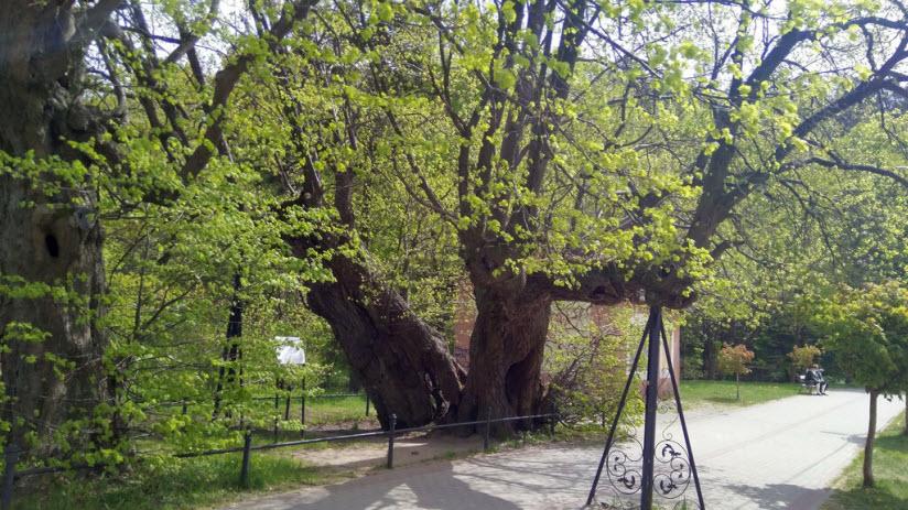 Парк Три старых липы