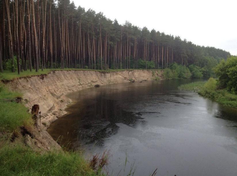 Карыжский лес
