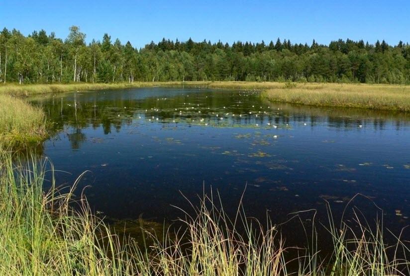 Клюквенное озеро
