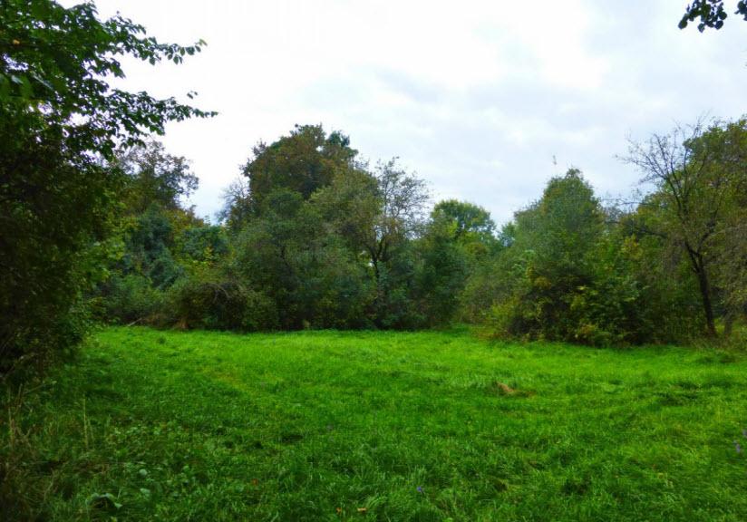 Парк Щетинка