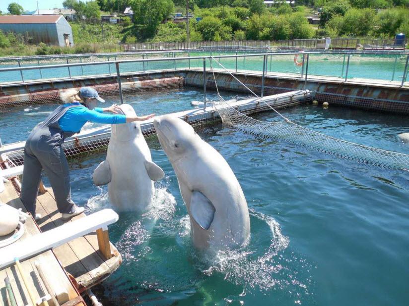 Дельфинарий в поселке Ливадия