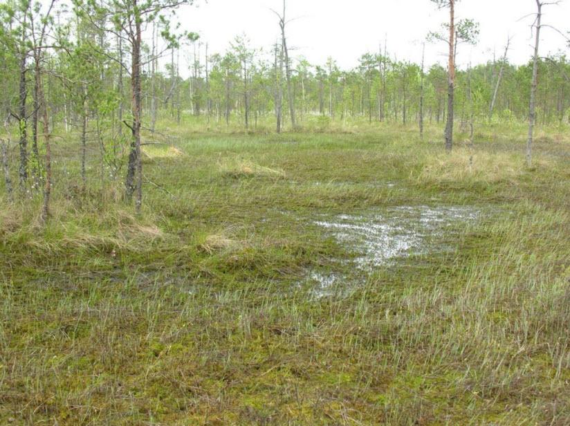 Галое болото