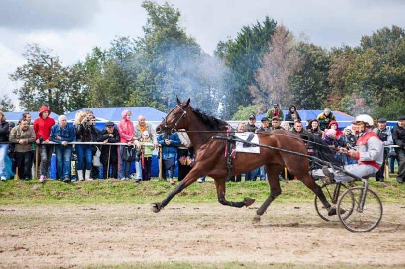 Локотский конный завод