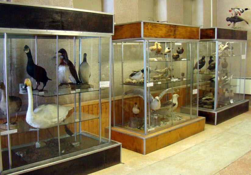 Музей Кандалакшского заповедника