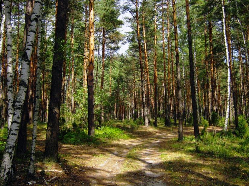 Солотчинский парк