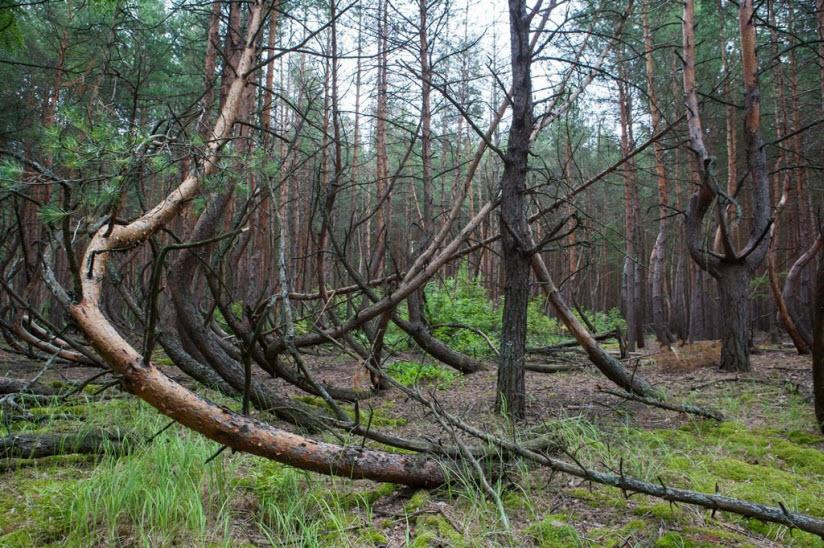 Танцующий лес в Тырново