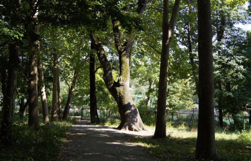 Памятник природы «Дуб Великан»