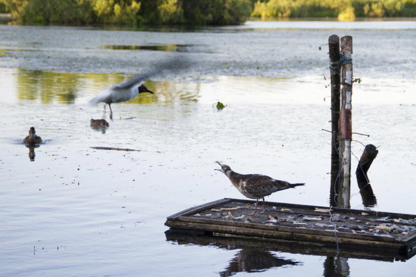 Природный заказник «Озеро Киово»