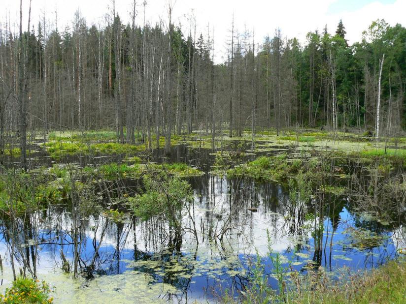 Сусанинское болото