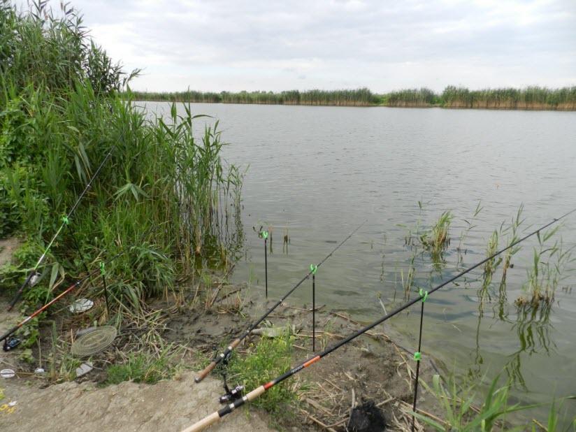 Рыбопитомники