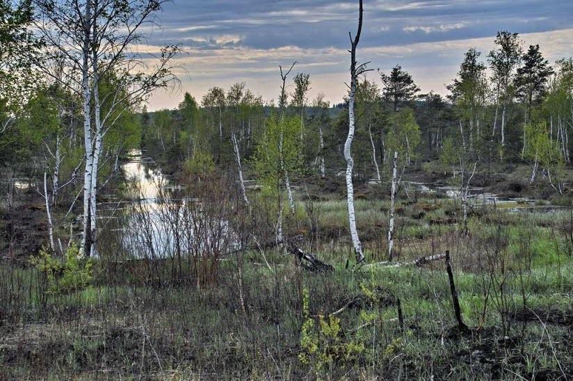 Берендеево болото