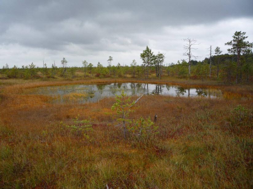 Уломское болото
