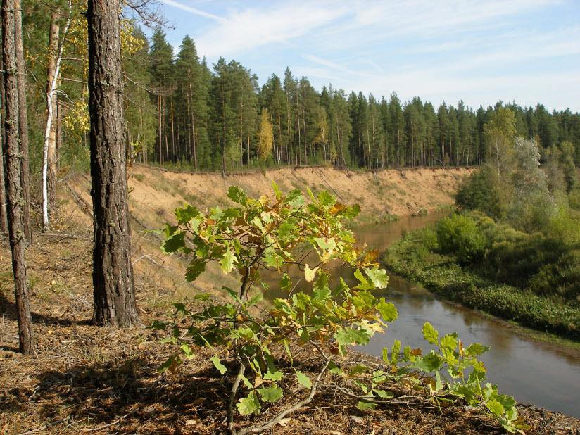 Национальный парк «Бузулукский бор»