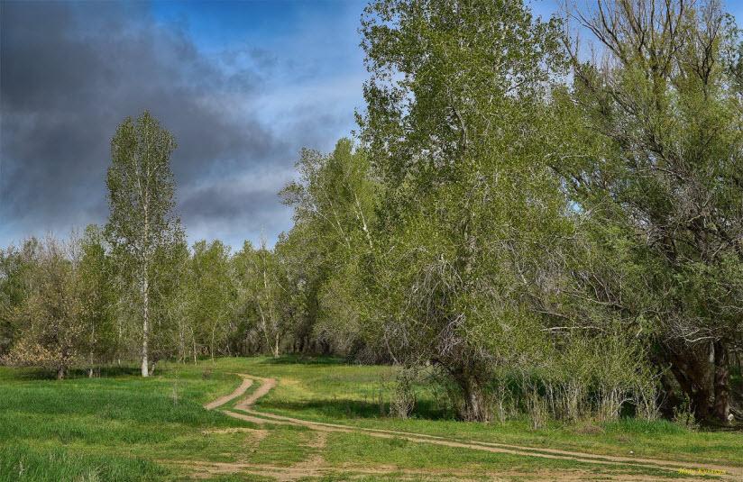 Орловский лес