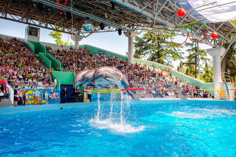 Большой сочинский дельфинарий «Ривьера»