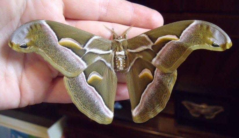 Студия «Мир бабочек»