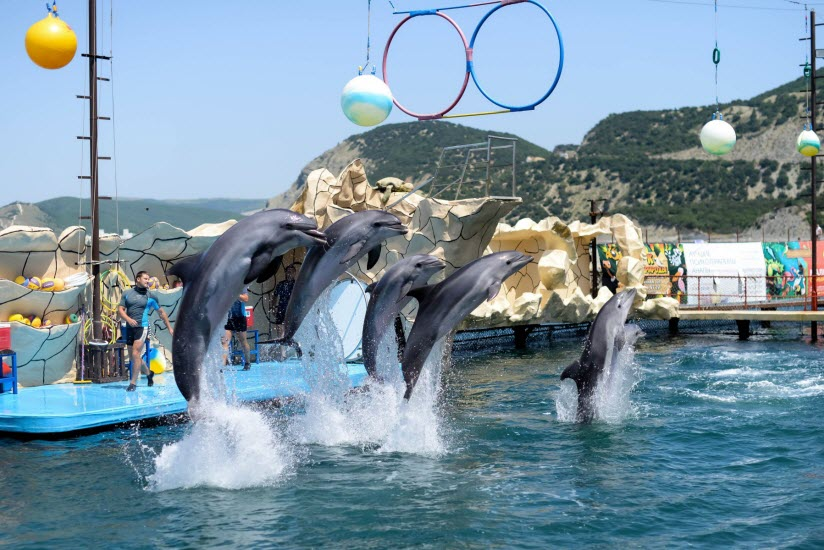 Дельфинарий «Большой Утриш»