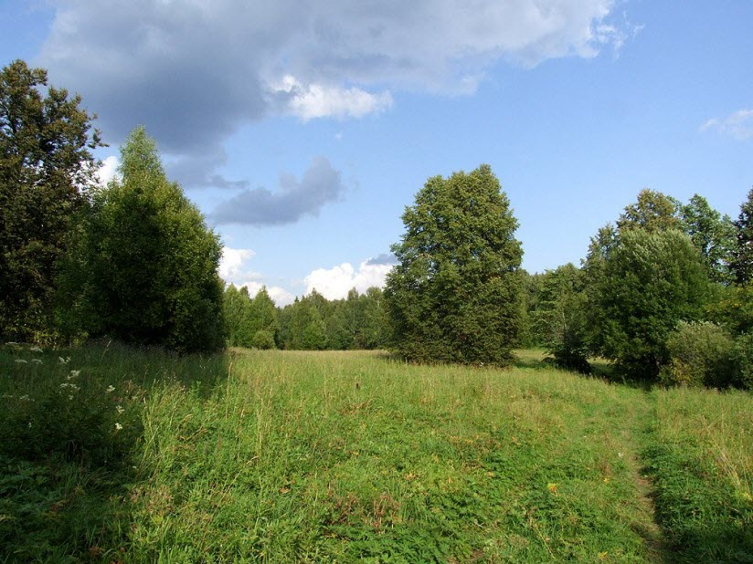Заказник Бушковский лес