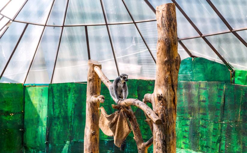 зоопарк «Зов Джунглей»