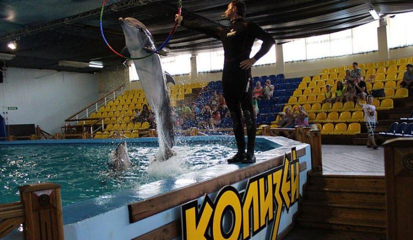 Дельфинарий «Колизей»
