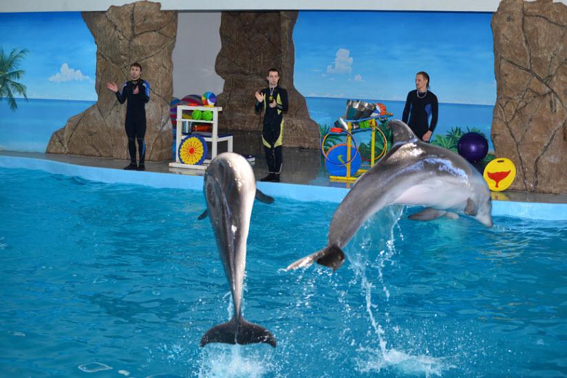 Дельфинарий «Лазаревский»