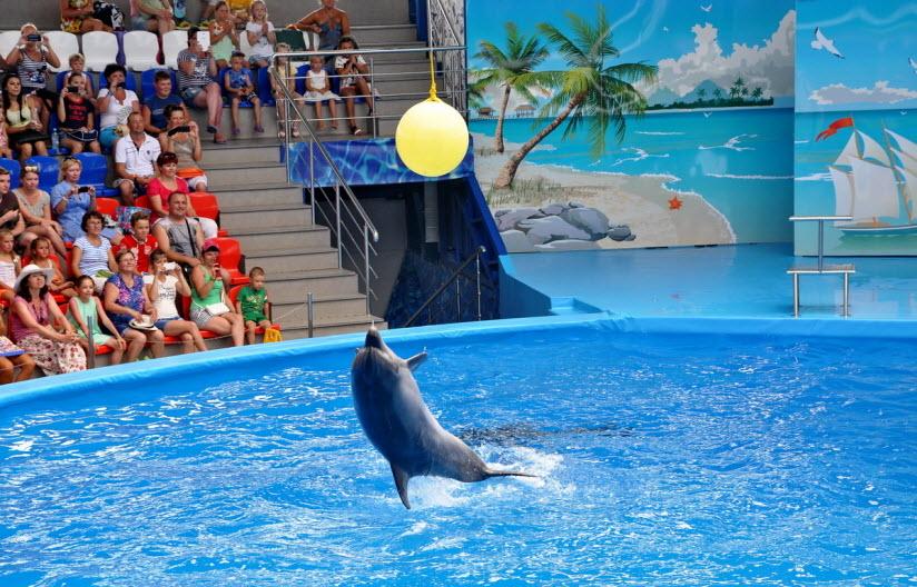 Дельфинарий в Сочи-парке