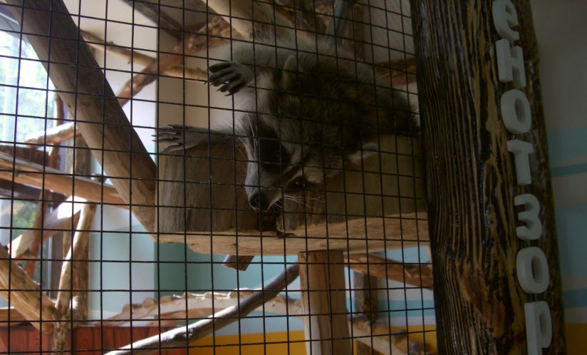 Контактный зоопарк «Лукоморье»
