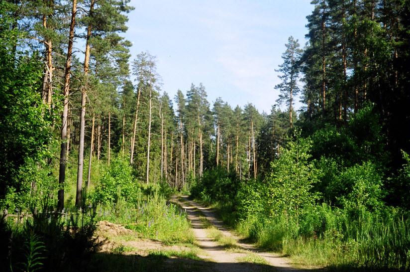Маловишерский лес