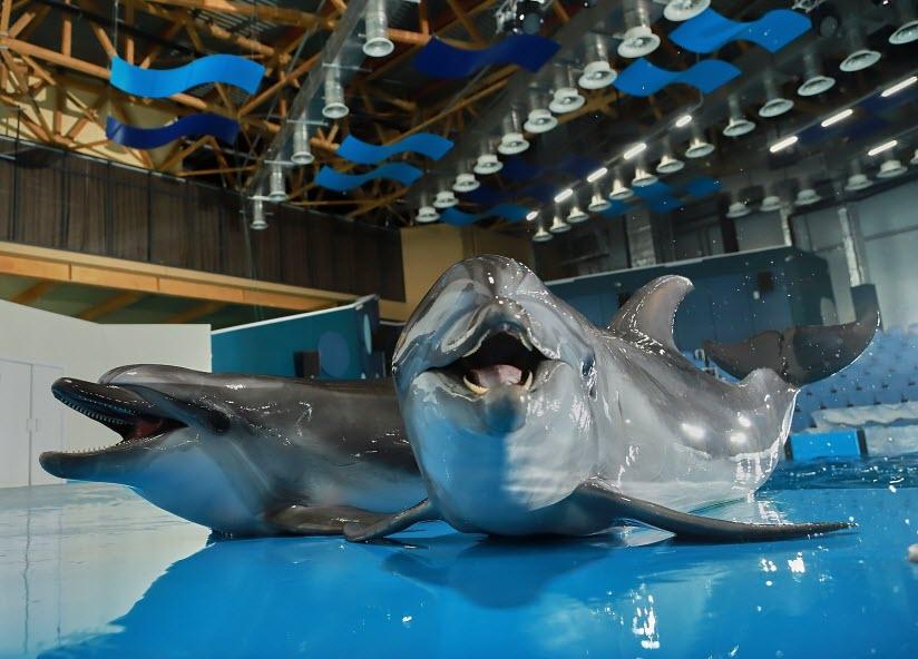 Океанариум с дельфинарием