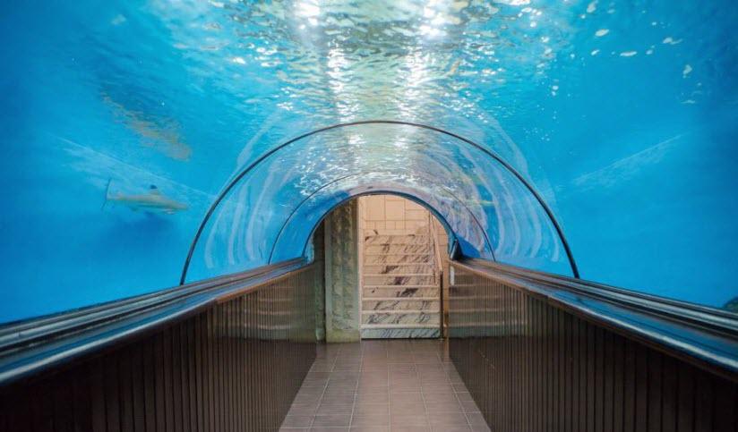Океанариум в «Дельфин-центре»