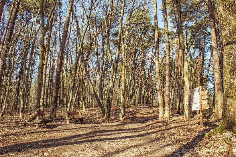 Лесопарк «Грэсовский лес»