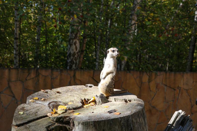 Новосибирский государственный зоопарк