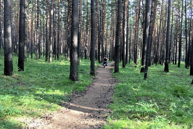 Памятник природы «Сосновый бор»