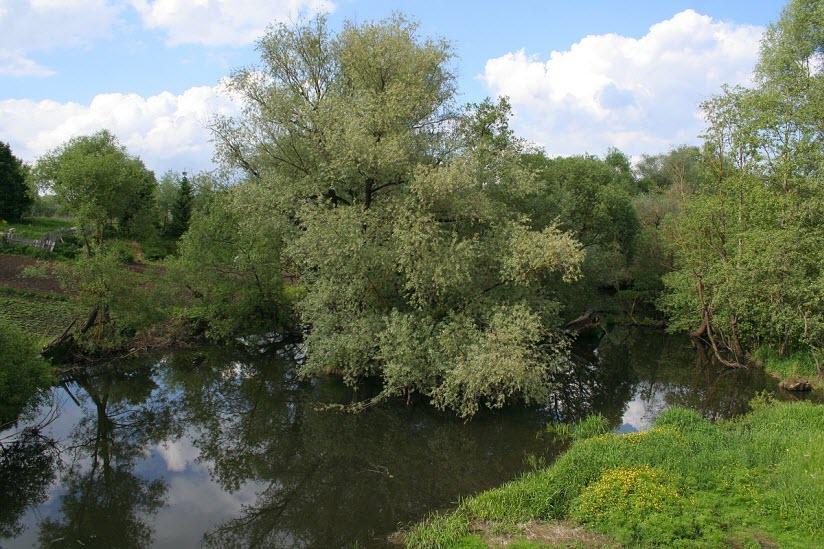 Река Медынка