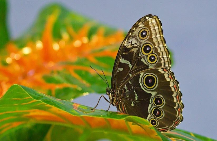 «Парк бабочек в тропиках»